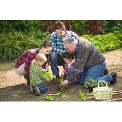Bolsa de jardín con 4 herramientas